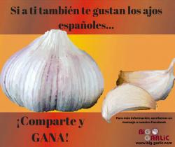 Me gustan los ajos españoles #BigGarlic#ConcursoFacebook#